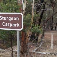 Hiking Mt. Sturgeon