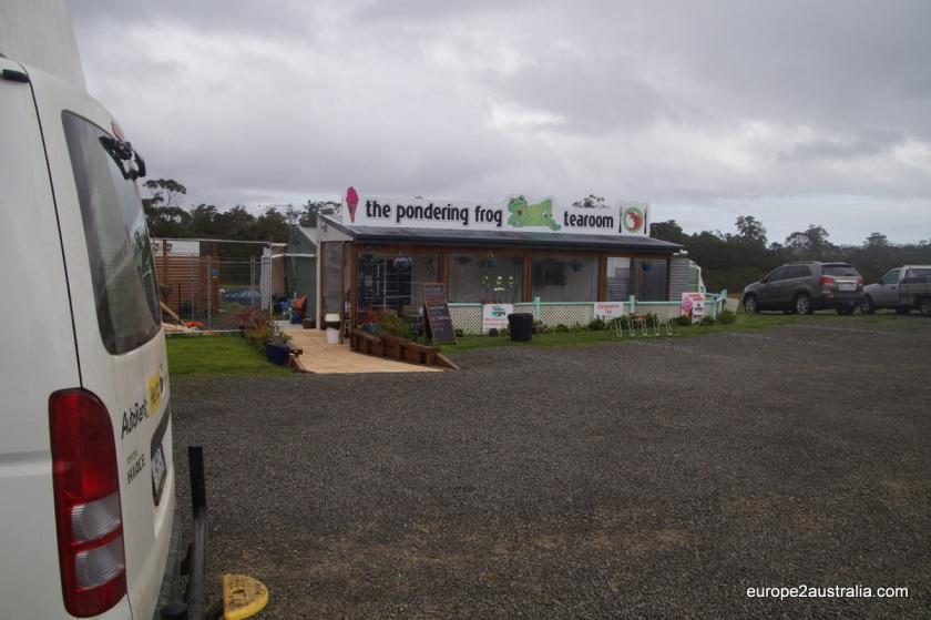 the-pondering-frog-tasmania