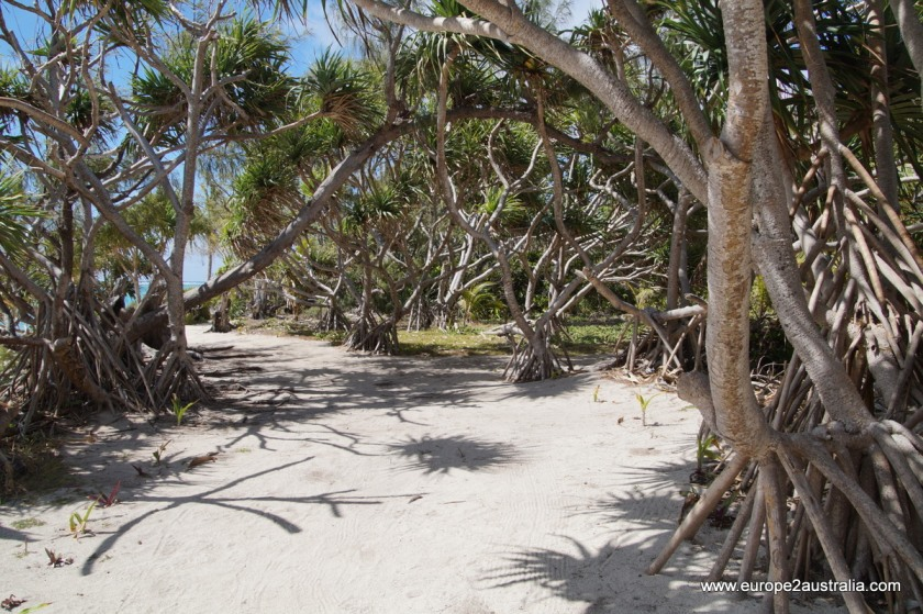 mystery-island-pathways