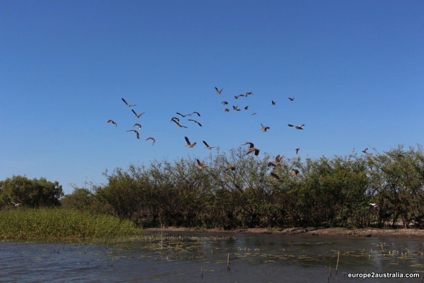 Next to the crocs, we also saw a whole lot of birds.